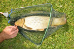 What Are the Different Types of Carp Fishing Tackle?