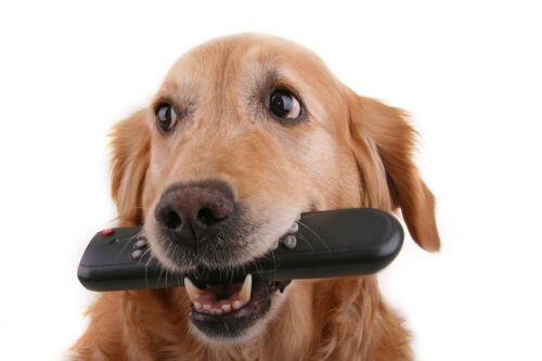 What to Do When the Dog Has Eaten the TV Remote