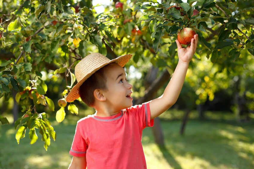 Deals apple orchard