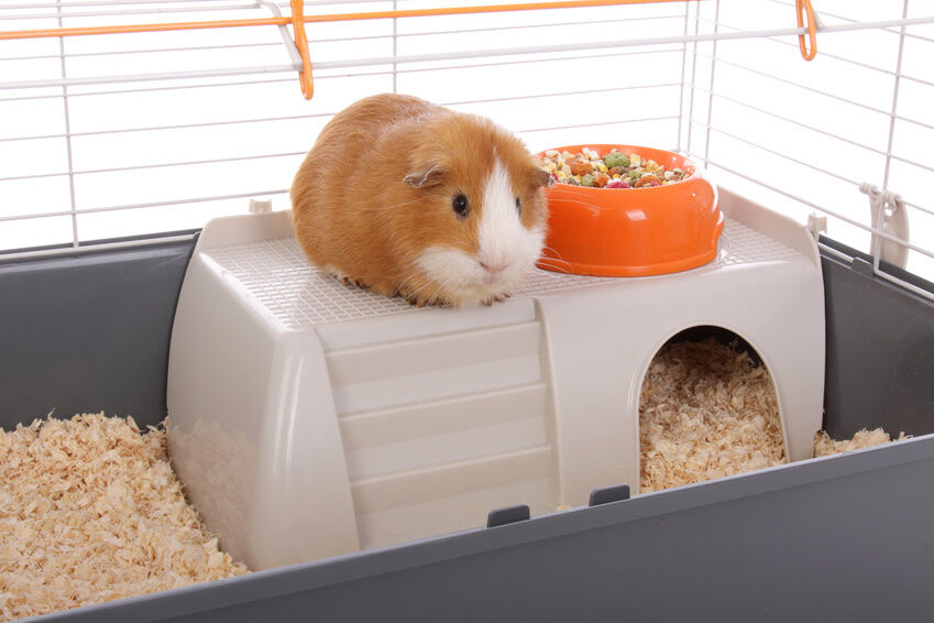 How to Choose a Small Animal Cage