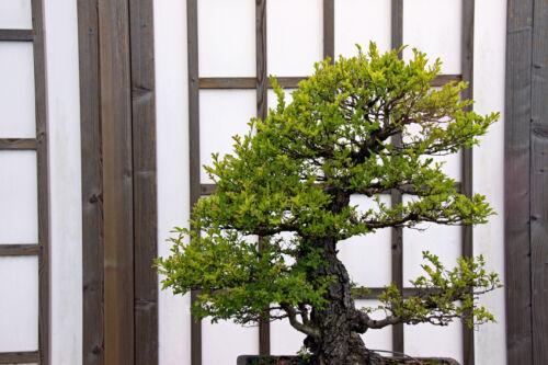 ratgeber zur gestaltung japanischer terrassen so setzen. Black Bedroom Furniture Sets. Home Design Ideas