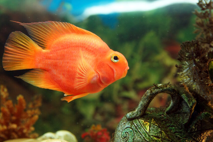 Top 3 Types of Cichlids