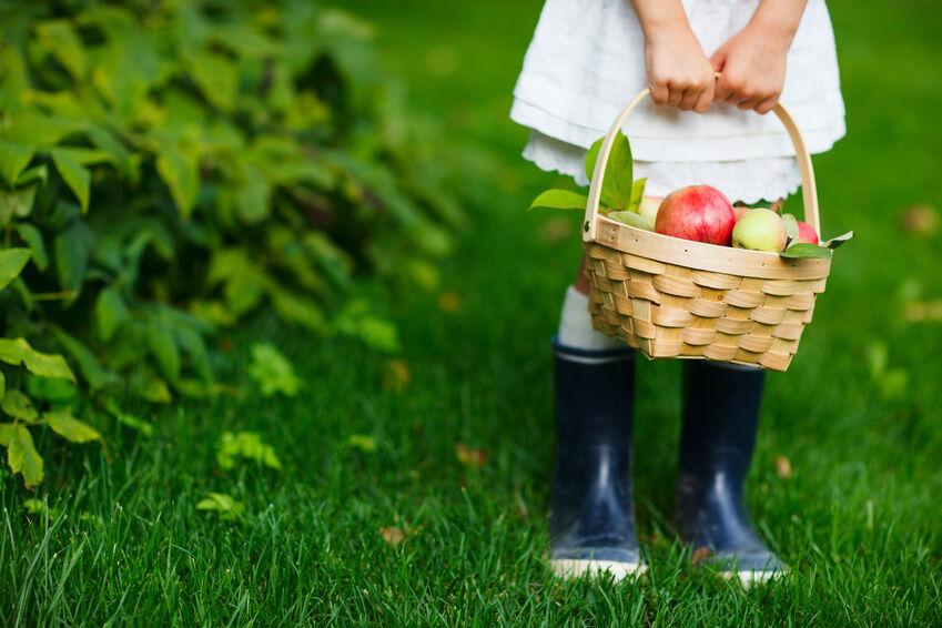 Gärtner-Einmaleins: Was ist beim Anbau von Obst zu beachten?