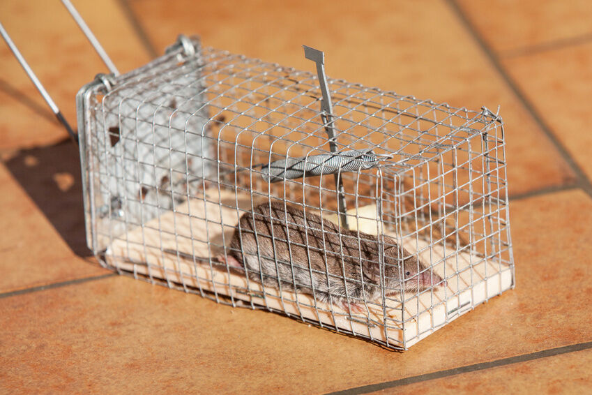 How To Make A Rat Cage Trap Ebay