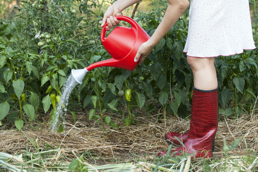 How to Maximise Your Pepper Plant Yield