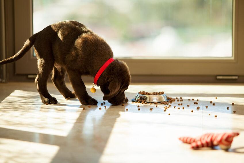 Welches Geschirr eignet sich für Hundewelpen?