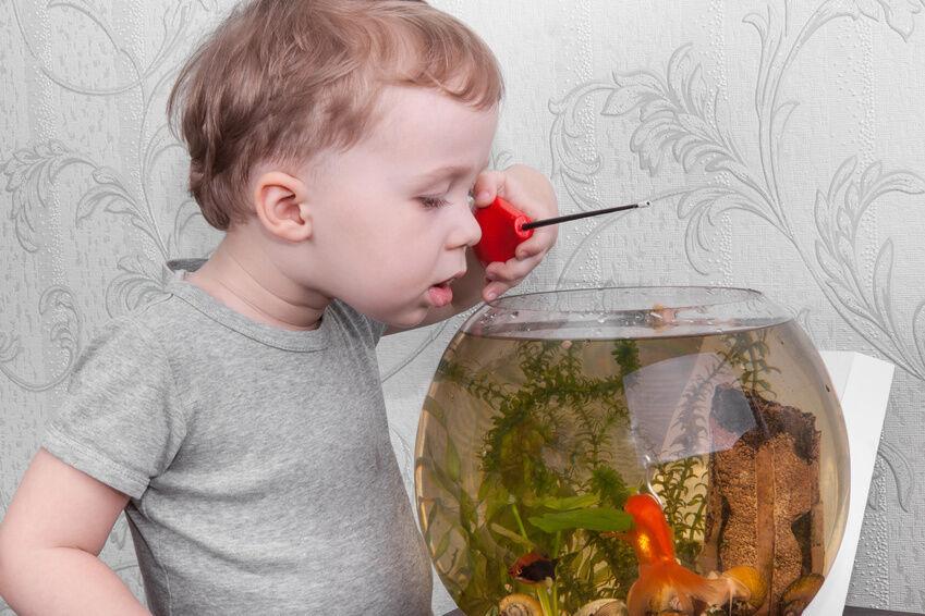 Was kann passieren, wenn die Wasser-Temperatur im Aquarium nicht stimmt? Was tun?