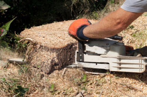 Your Guide to Buying a Corded Electric Chainsaw