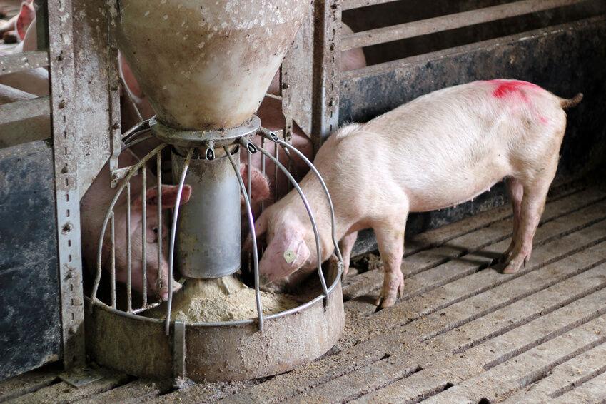How To Build A Hog Feeder