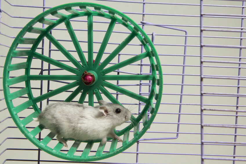 how to make a carton toothed wheel