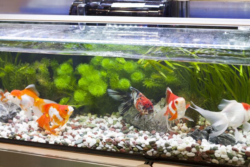 Top 10 Freshwater Aquarium Fish | eBay