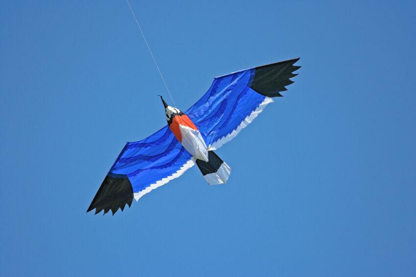 How To Make A Bird Kite Ebay