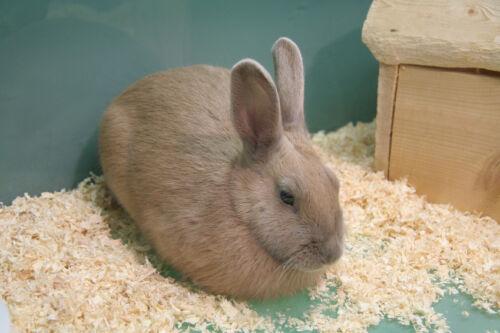 Kaninchen päppeln - mit diesen Futtermitteln legen kranke und schwache Tiere wieder an Gewicht zu