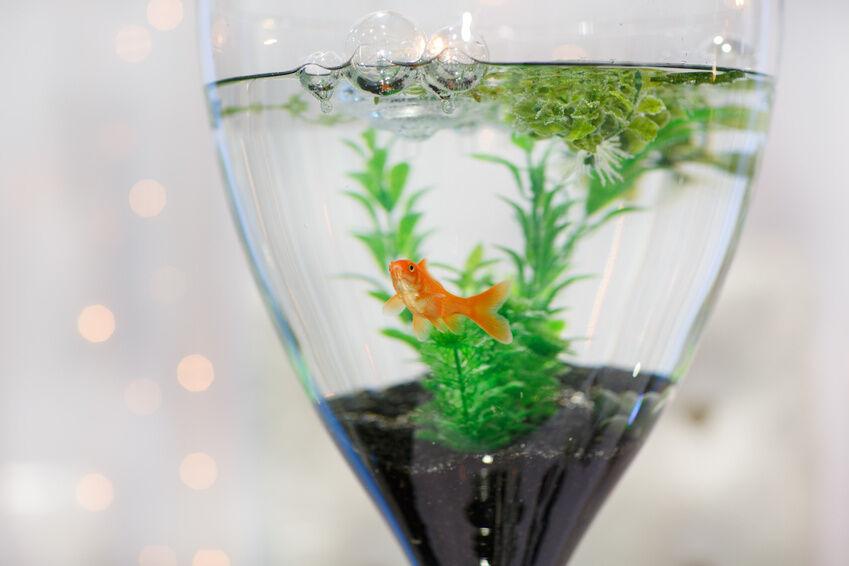 10 great table centerpieces for the next party ebay for Aquarium vase decoration