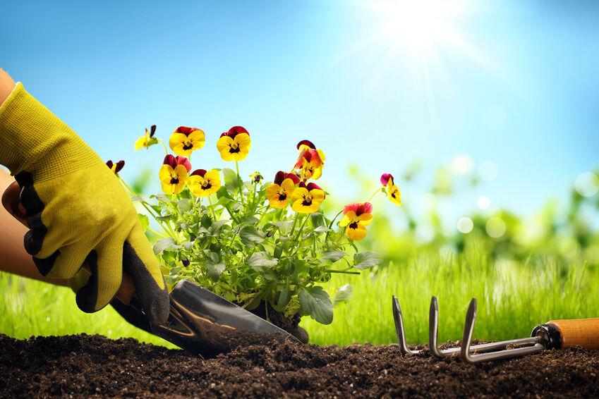 Should You Buy Topsoil or Garden Soil?