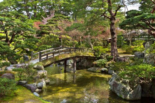 Lebensbäume: immergrünes Zypressengewächs als Gestaltungselement oder Hecke