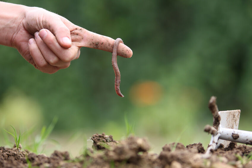 Your Guide to Buying Composting Worms