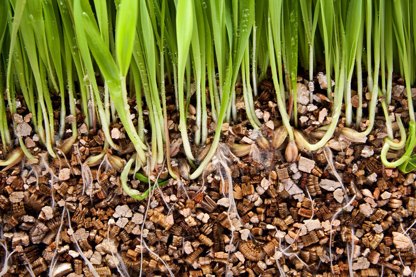 Vermiculite For Plants What Is Vermicu...