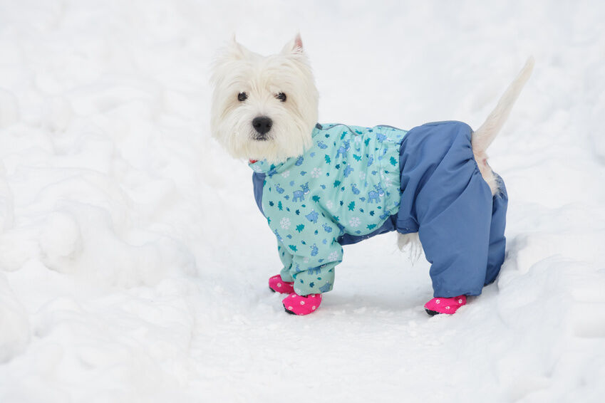 Dog Clothing for the Winter Season: A Buying Guide
