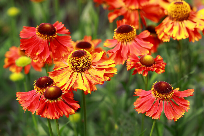 Top 5 Flowers for a Fall Garden eBay
