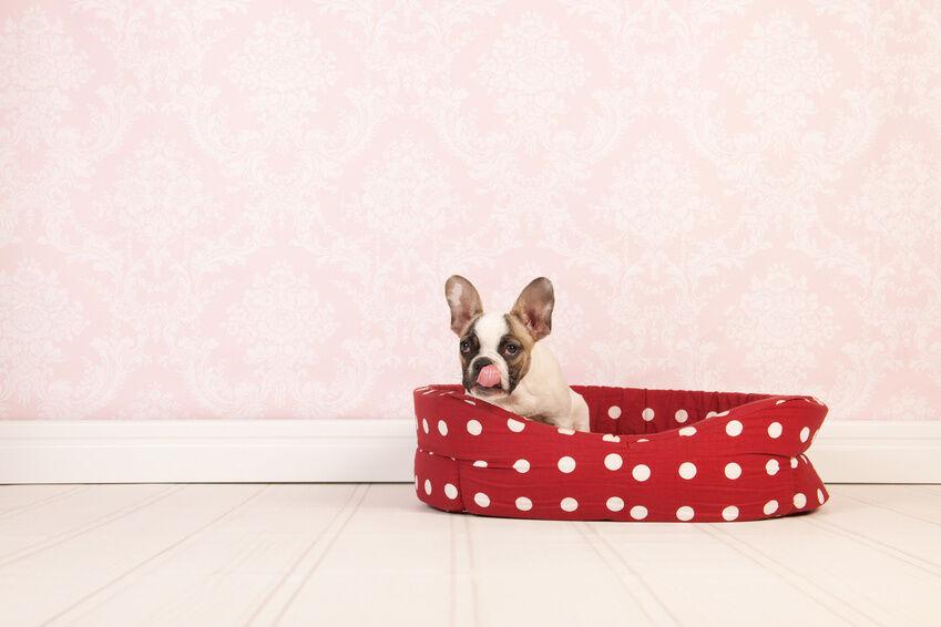 Auf welche Materialien sollte man beim Kauf eines Hundekorbs achten?