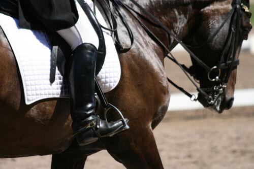 Personalised Saddlecloth Buying Guide