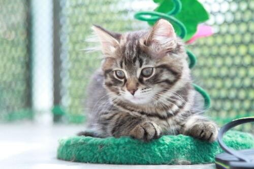 Sicherheitsnetze für Katzen finden