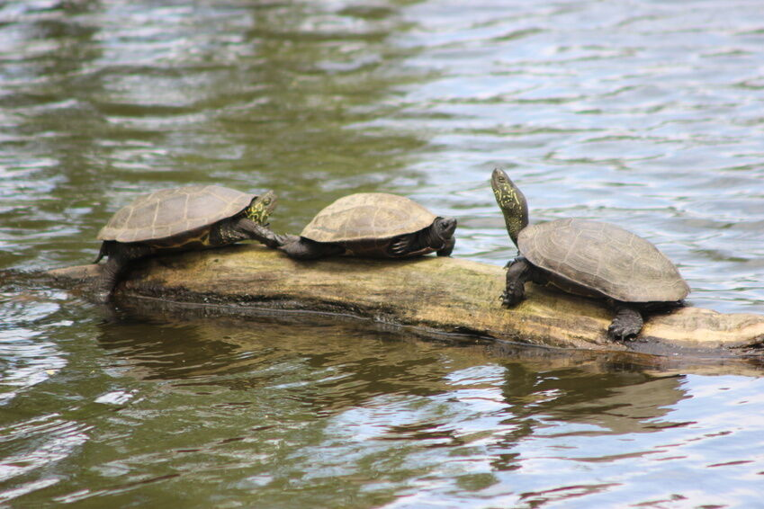 How to make a turtle pond ebay for Outside goldfish ponds