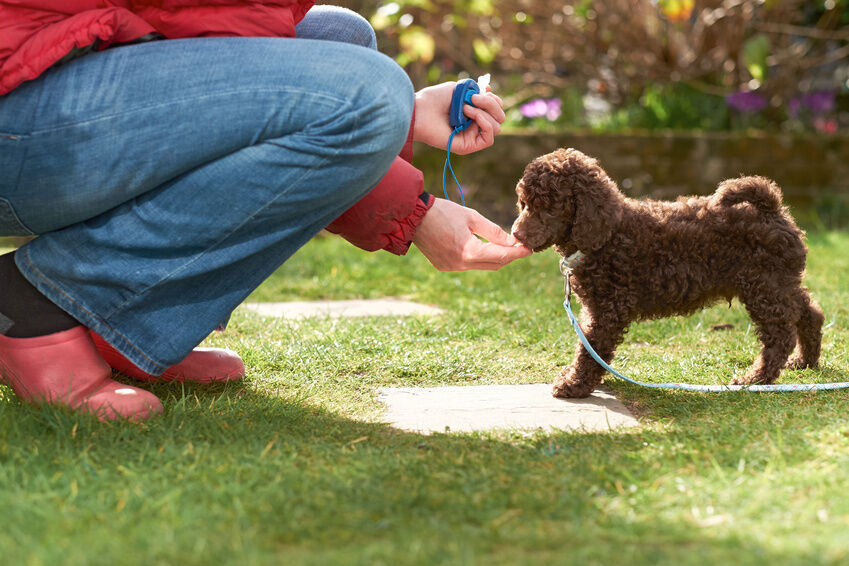 Tips for How to Properly Use Dog Leads