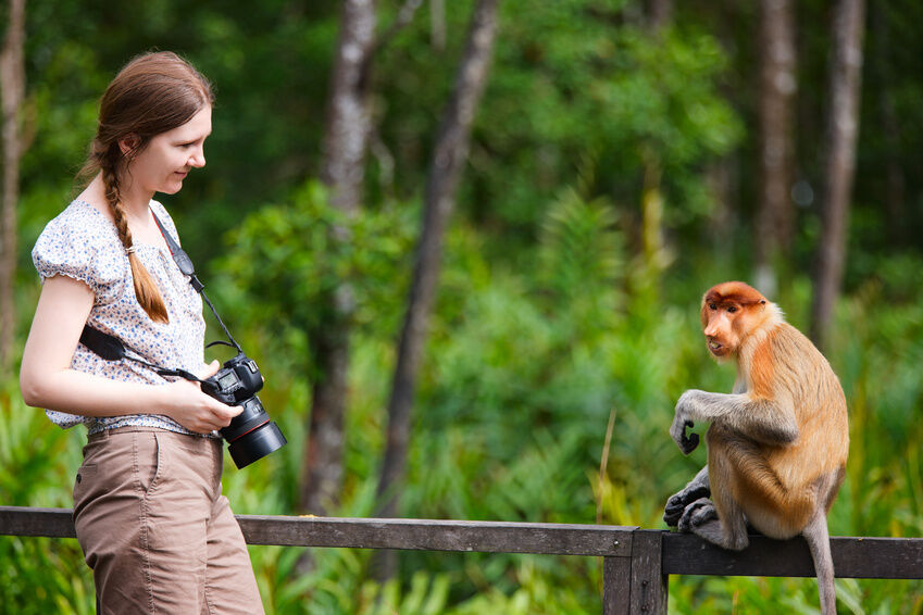The Most Popular Lenses for Wildlife Photographers