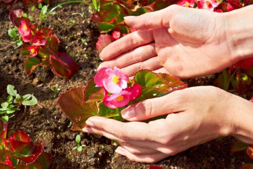 Einjährige Blumen & Stauden auf eBay finden