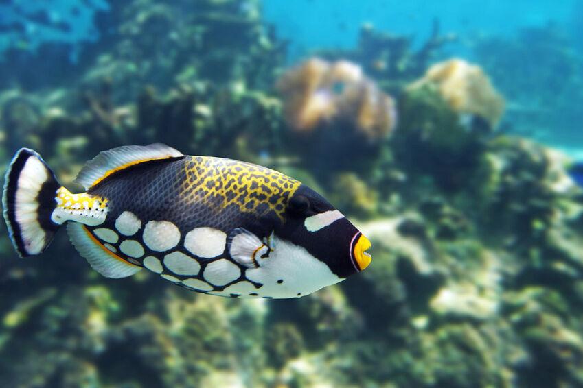 Die beliebtesten meerwasser zierfische ebay for Suche zierfische