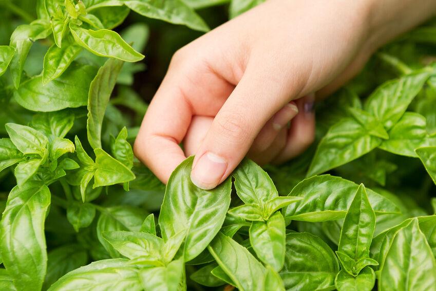 5 Herb Garden Tips for Beginners eBay