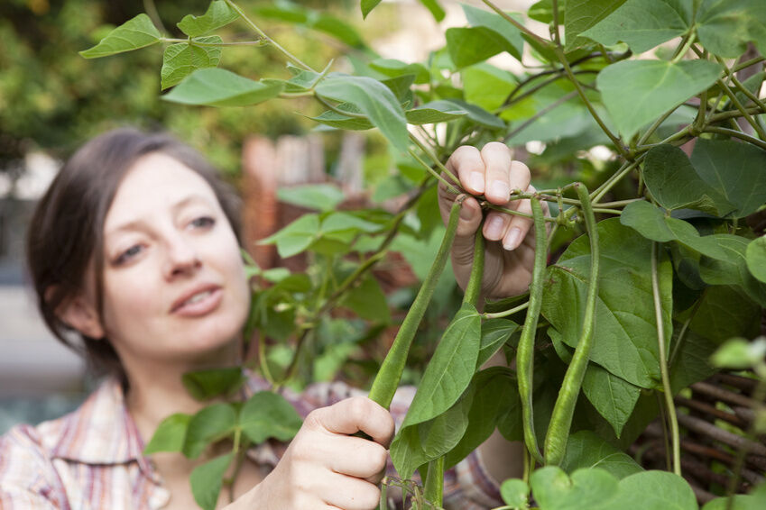 Top Bean Seeds to Plant in Your Garden