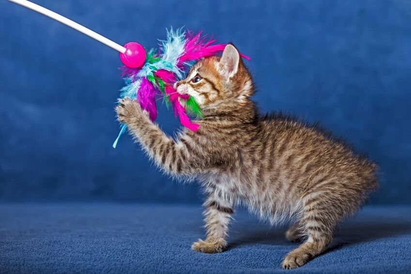 Cat Dancer Toy Video