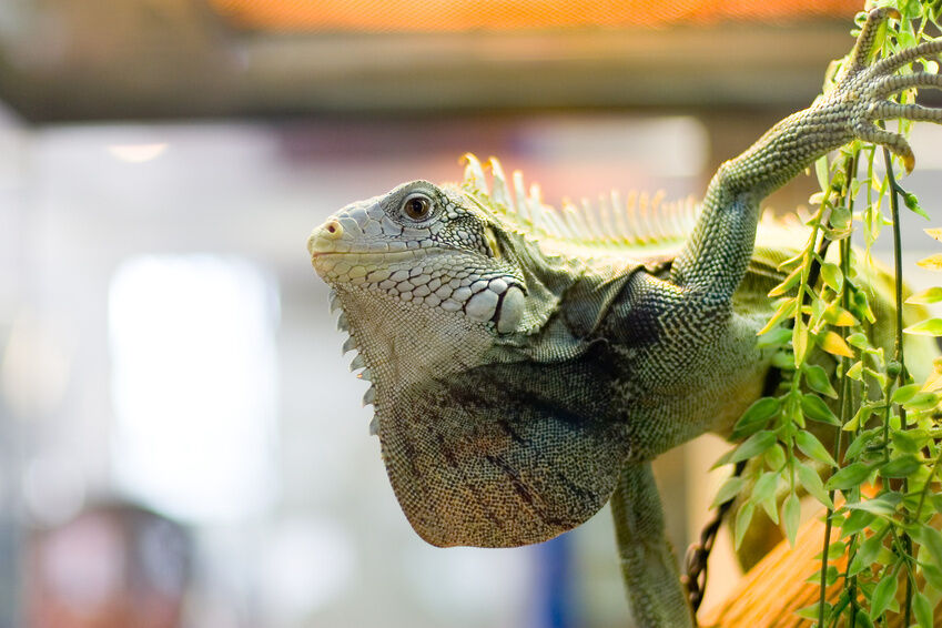 Top Supplies to Care For Your Pet Reptile