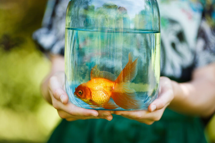 How to raise goldfish ebay for What fish can live with goldfish