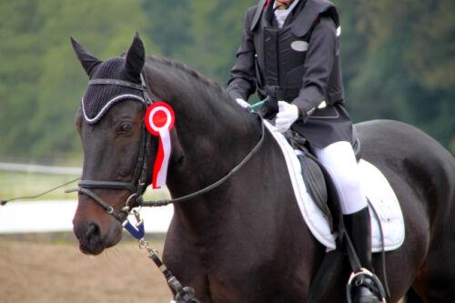 Bereit fürs Turnier: So wählen Sie die passenden Gamaschen und Decken für Ihr Pferd aus