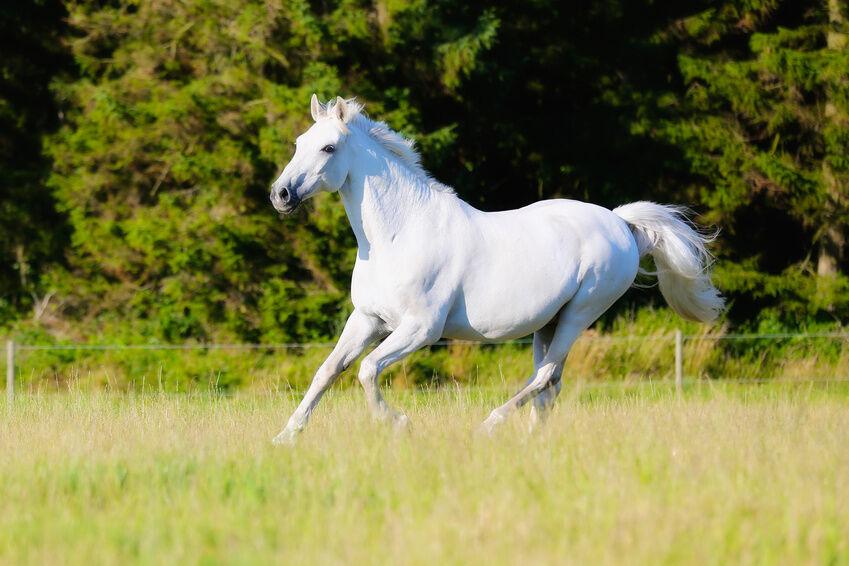 Geschenk-Ideen für Pferdefans