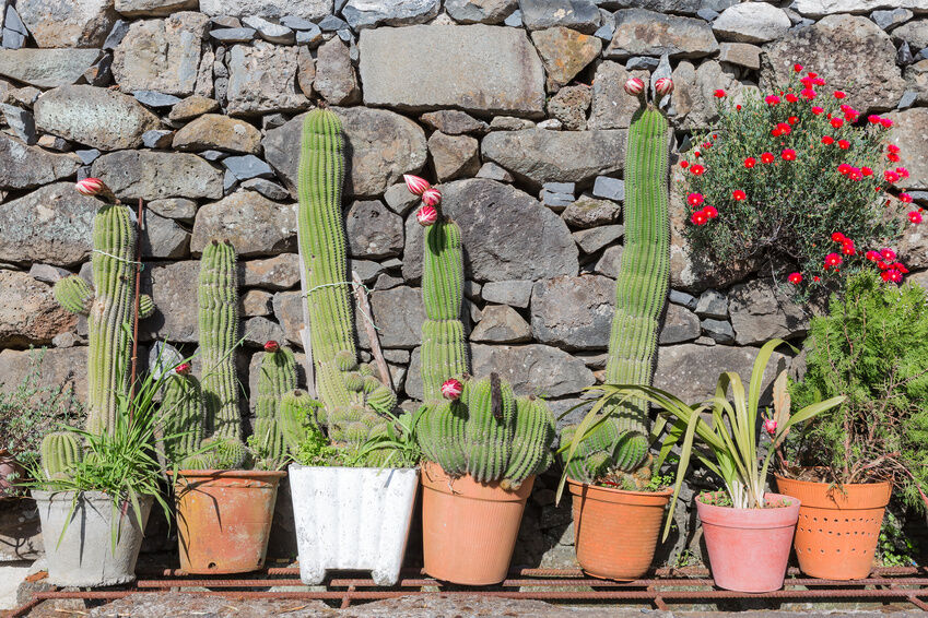 DIY Create a Cactus Garden eBay