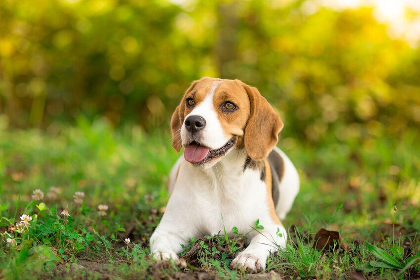 Top 10 Best Small Dog Breeds Ebay
