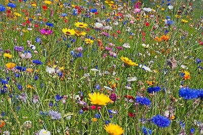 Sommerliche Blütenpracht: Die Schönsten Blumen Für Balkon Und ... Blutenpracht Auf Dem Balkon Blumen
