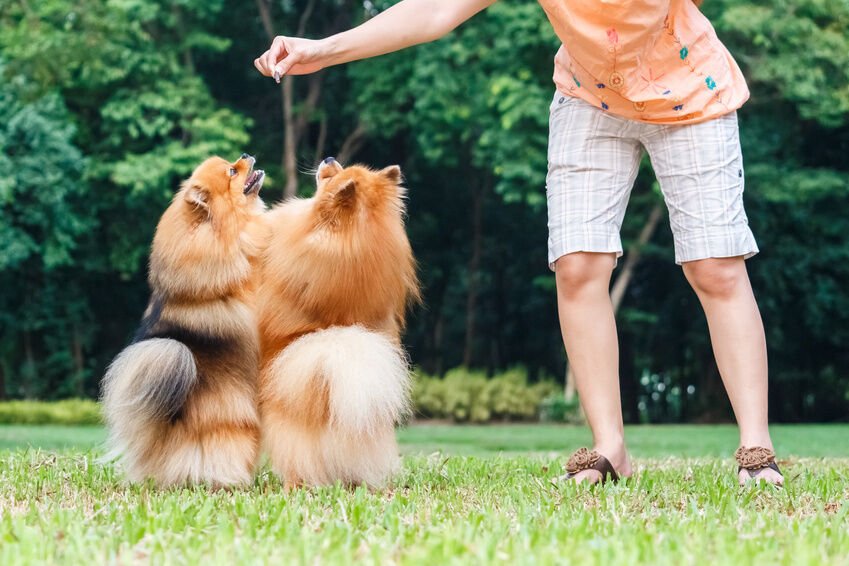 Top Dog Treat Brands that Are Healthy Options