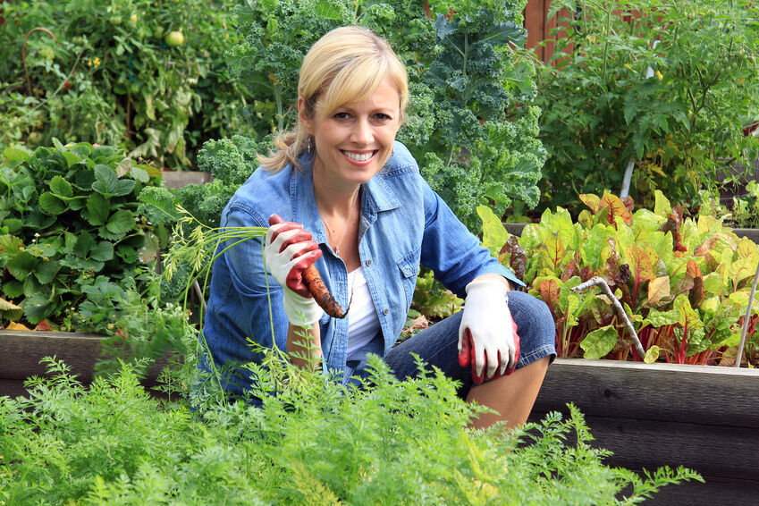 Top Tips for Protecting Your Vegetable Garden
