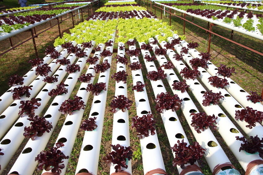 How to Buy Used Hydroponic Gear on eBay