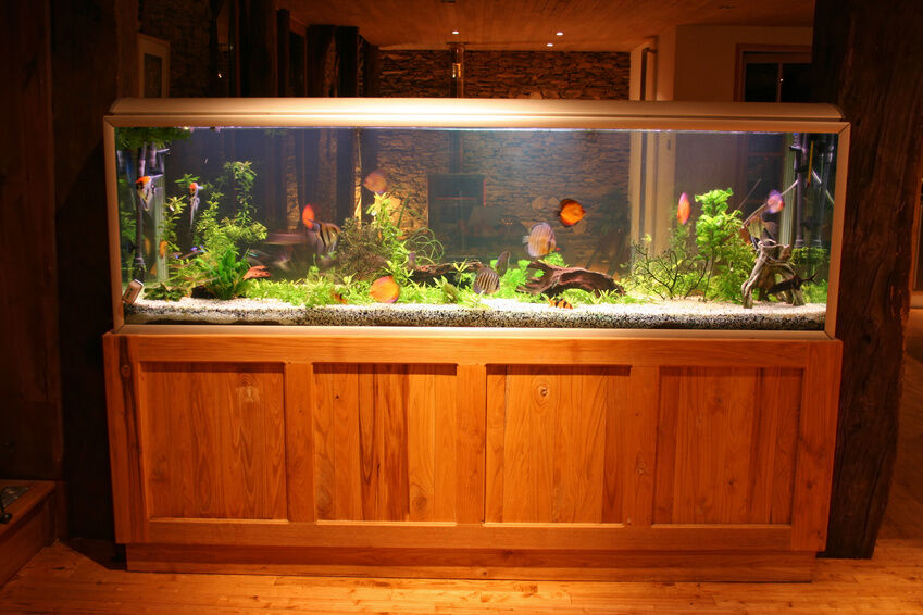 Your guide to buying a tropical fish tank ebay for Exotic fish tanks