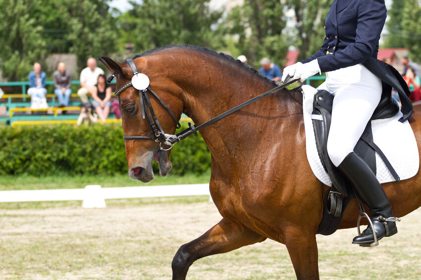 How to Buy a Saddle for Dressage