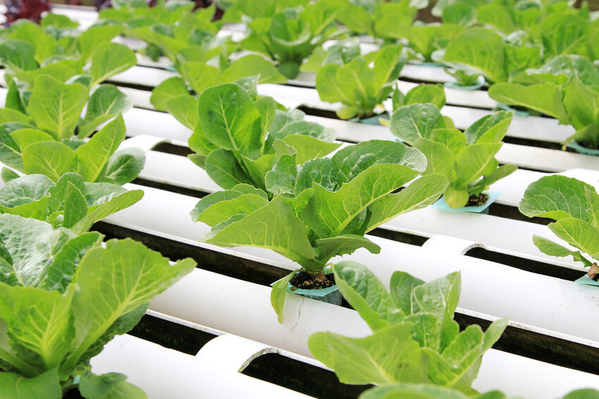 Buying Guide to Mylar for Hydroponics