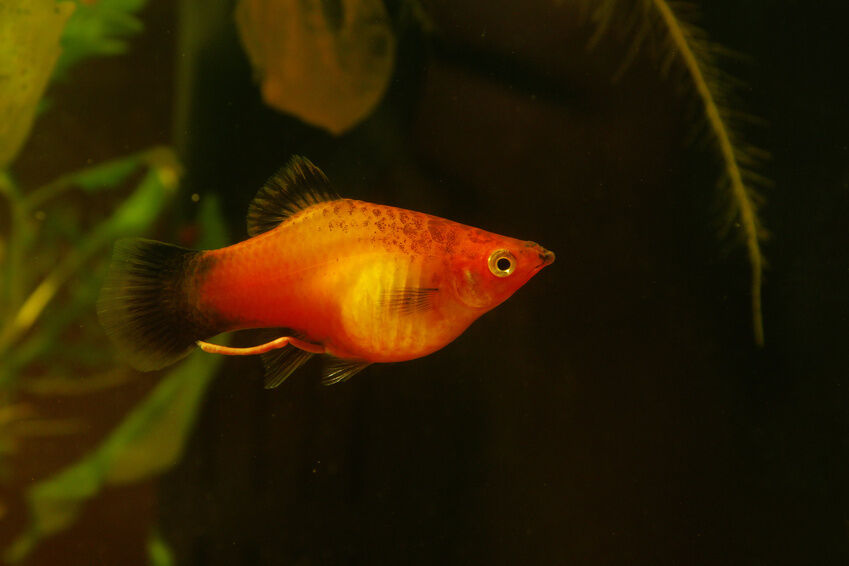 Top 10 freshwater aquarium fish ebay for Best community fish