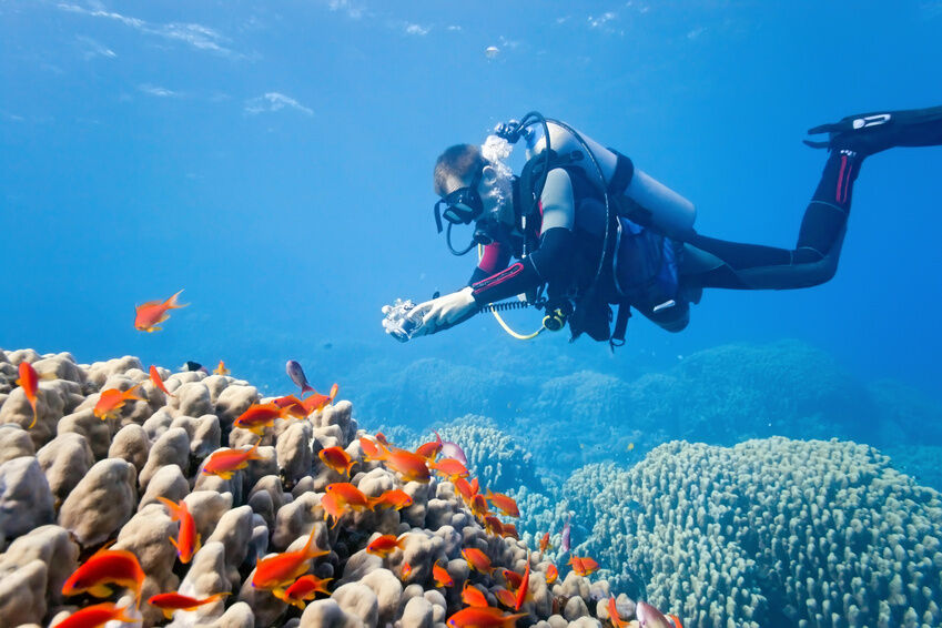 Your Guide to Diving Like a Professional